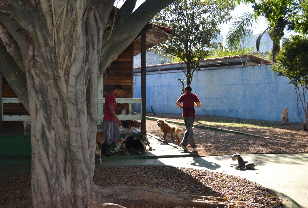 Creche Canina no Jardim América - Creche para Animais