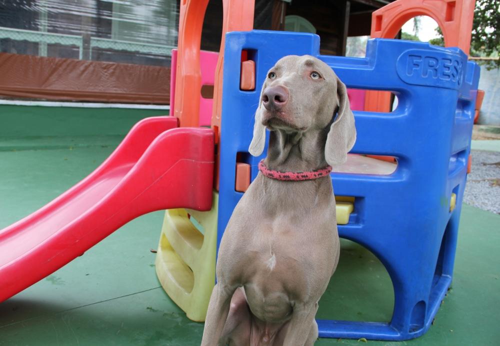 Creche com Day Care para Cachorro Preço no Tatuapé - Creche Canina