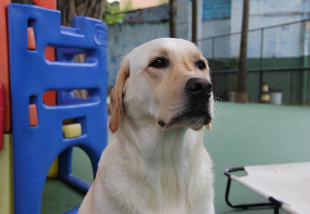 Creche com Daycare para Cachorro no Socorro - Creche para Animais