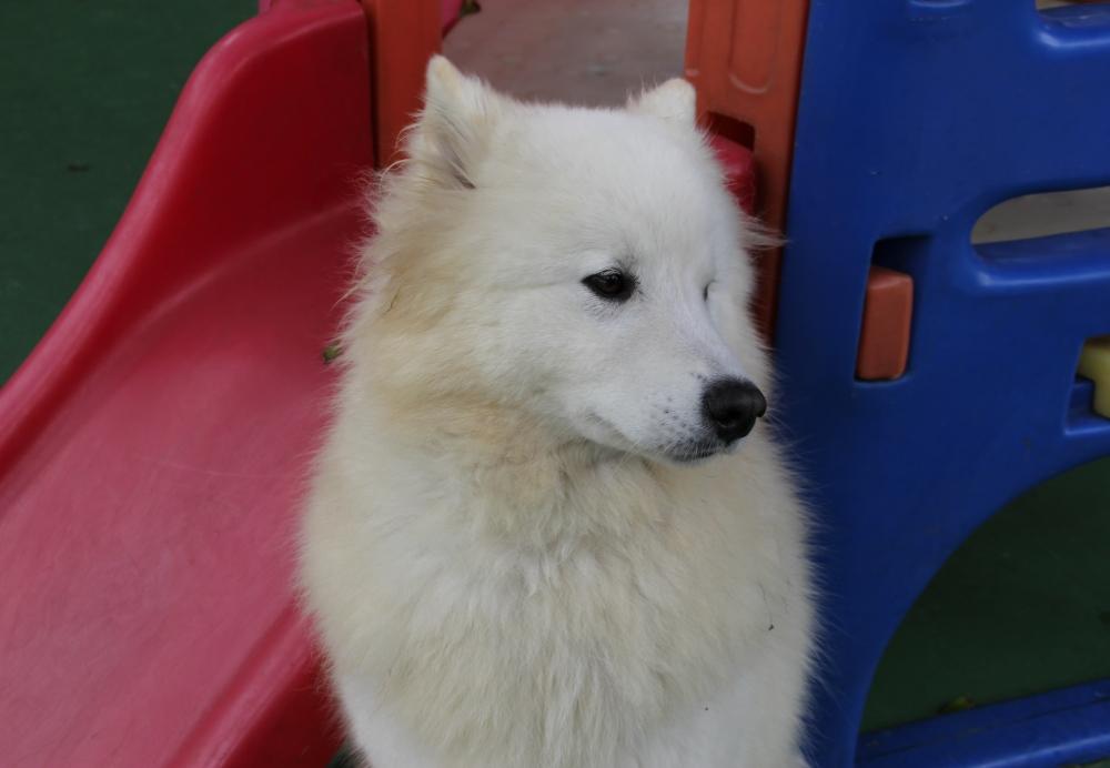 Creche de Animais Preço no Aeroporto - Creche para Cães