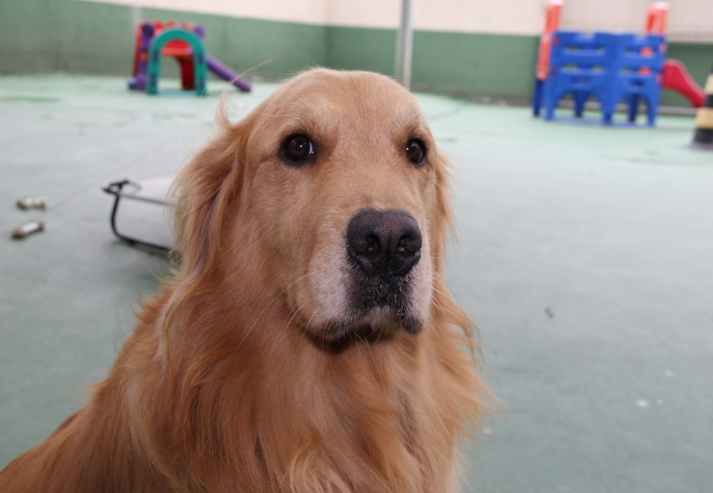 Creche de Animais no Campo Grande - Creche para Cachorro em Sp