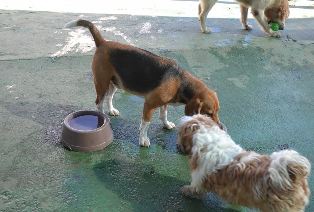 Creche de Cachorro na Vila Sônia - Creche Canina