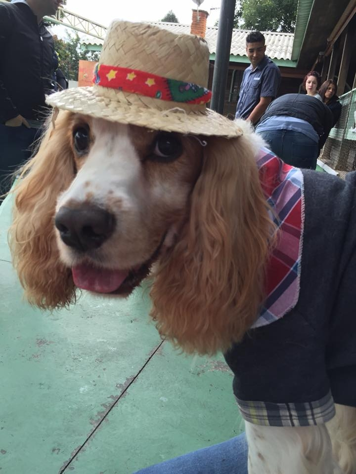 Creche de Cães no Jaraguá - Creche para Animais