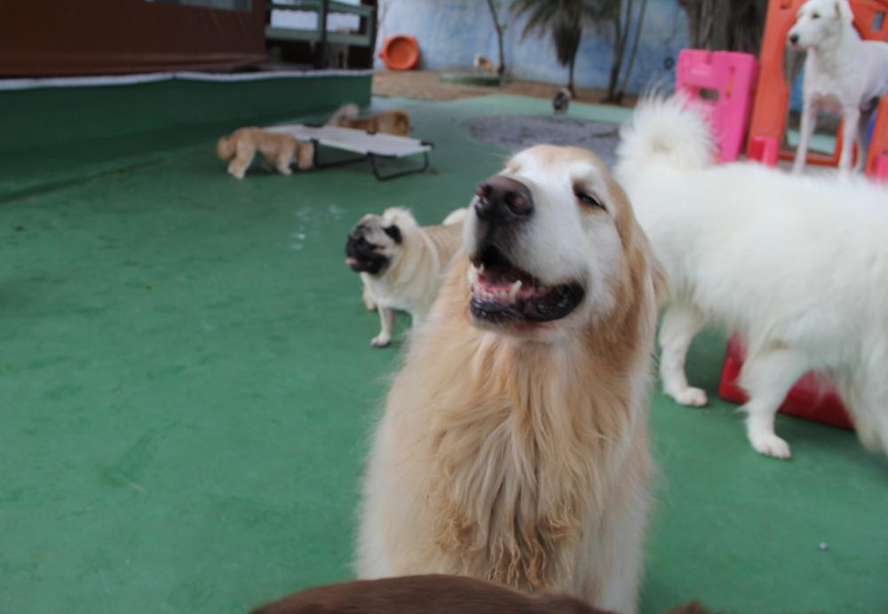 Creche de Pet na Ponte Rasa - Creche para Cães