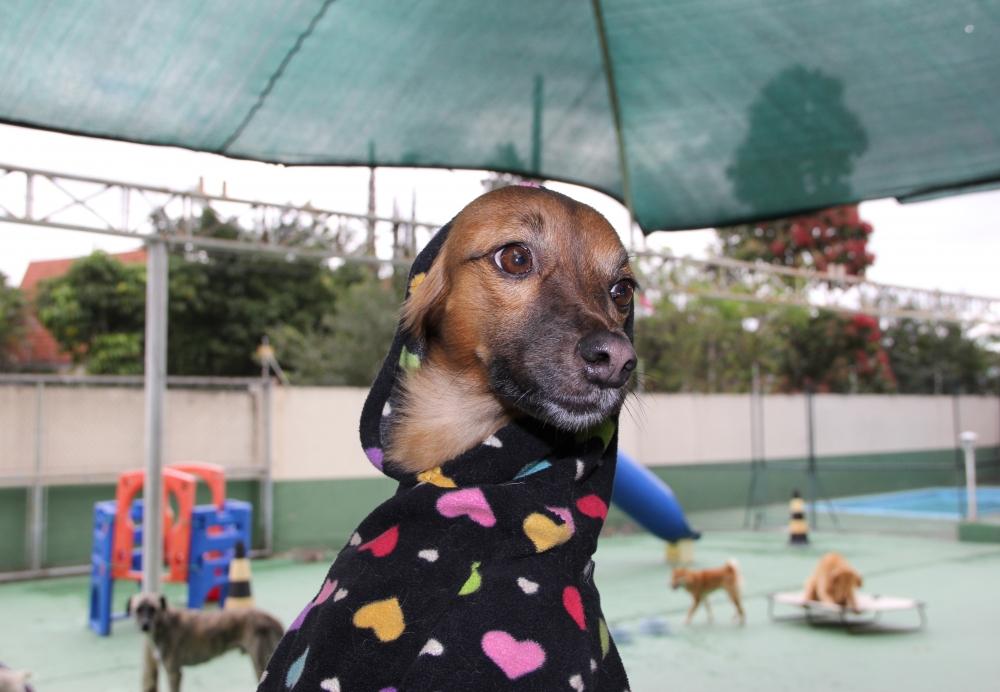 Creche de Pets Preço no Morumbi - Creche para Cães