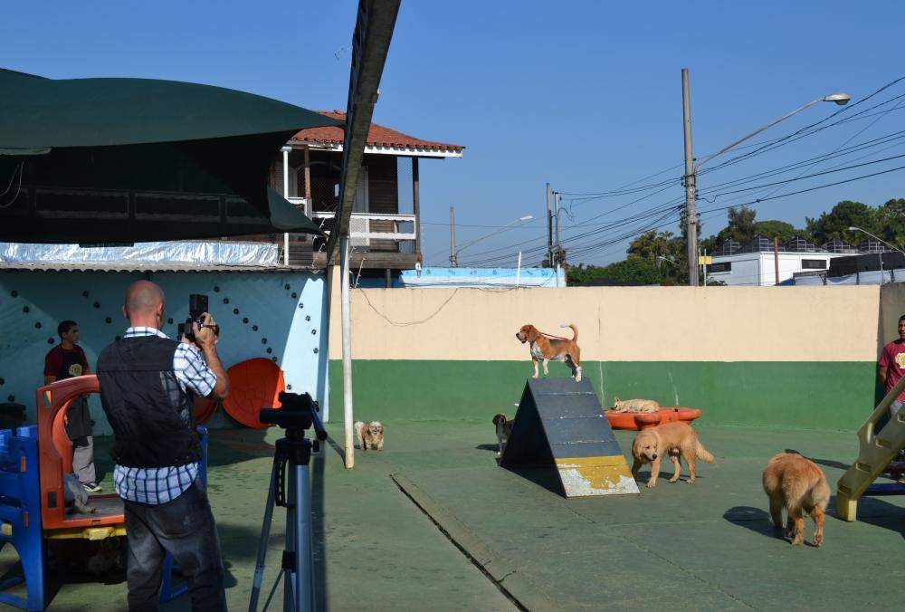 Creche para Animais Jardim Aracília - Creche para Cães