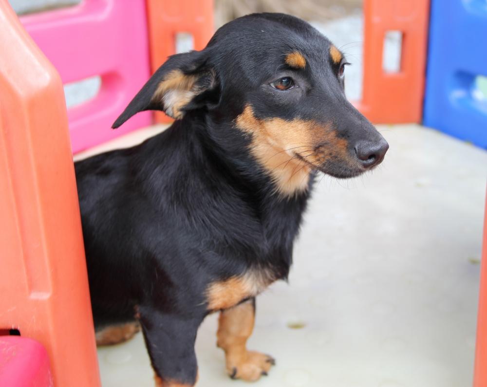 Creche para Cachorro em São Paulo Preço Gopoúva - Creche para Animais