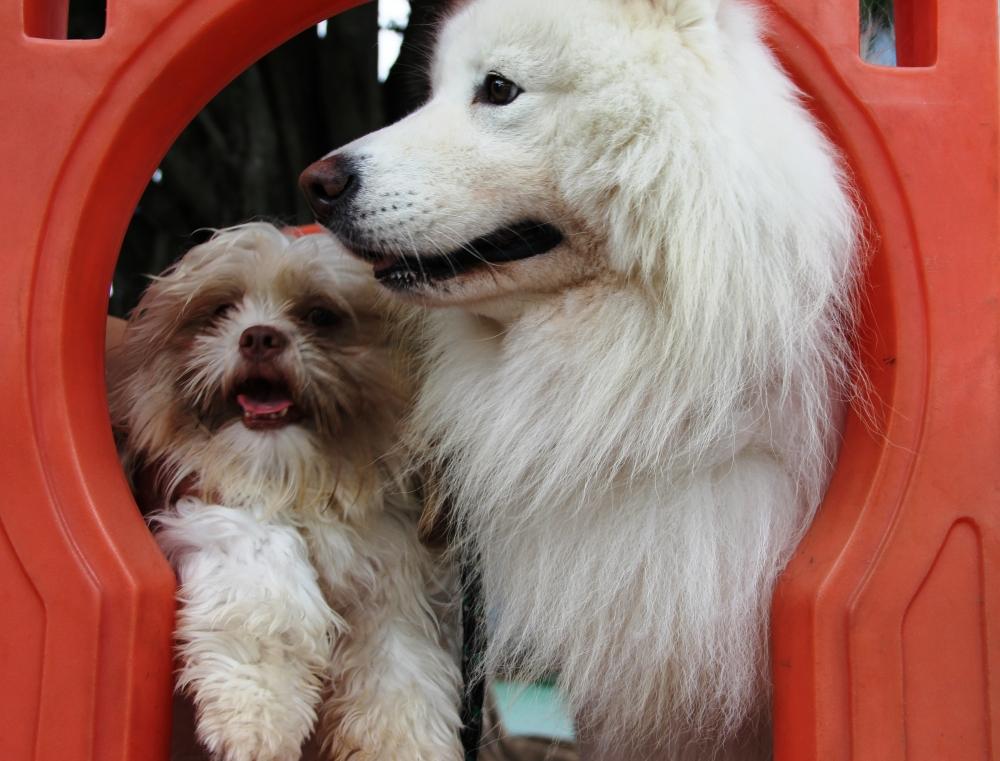 Creche para Cachorro em São Paulo na Vila Maria - Creche de Cachorro