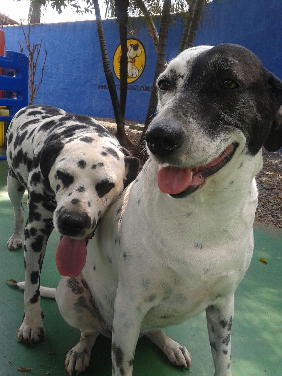 Creche para Cachorro em Sp na Cidade Patriarca - Creche para Cães