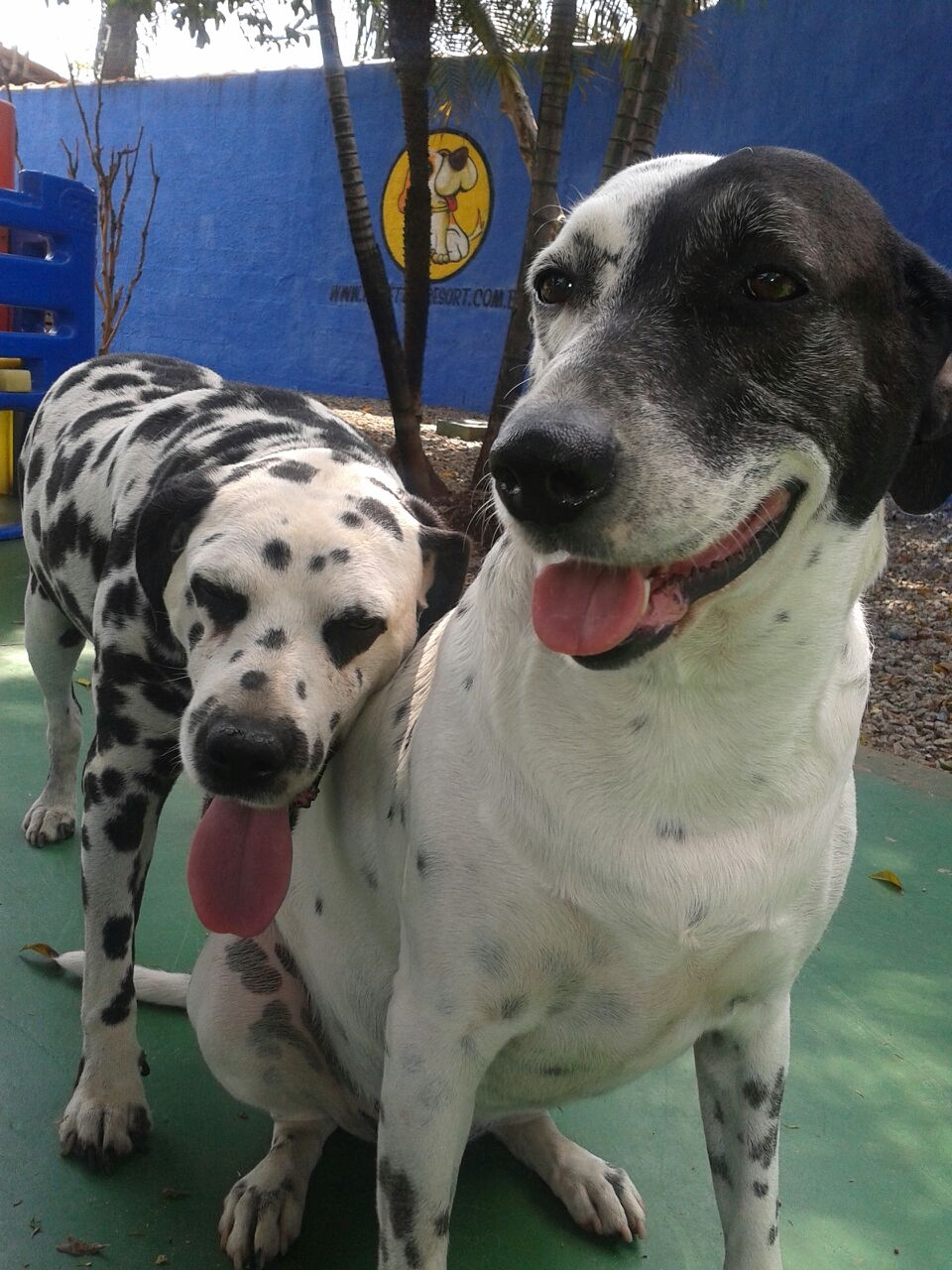 Creche para Cachorro em Sp na Vila Sônia - Creche Canina