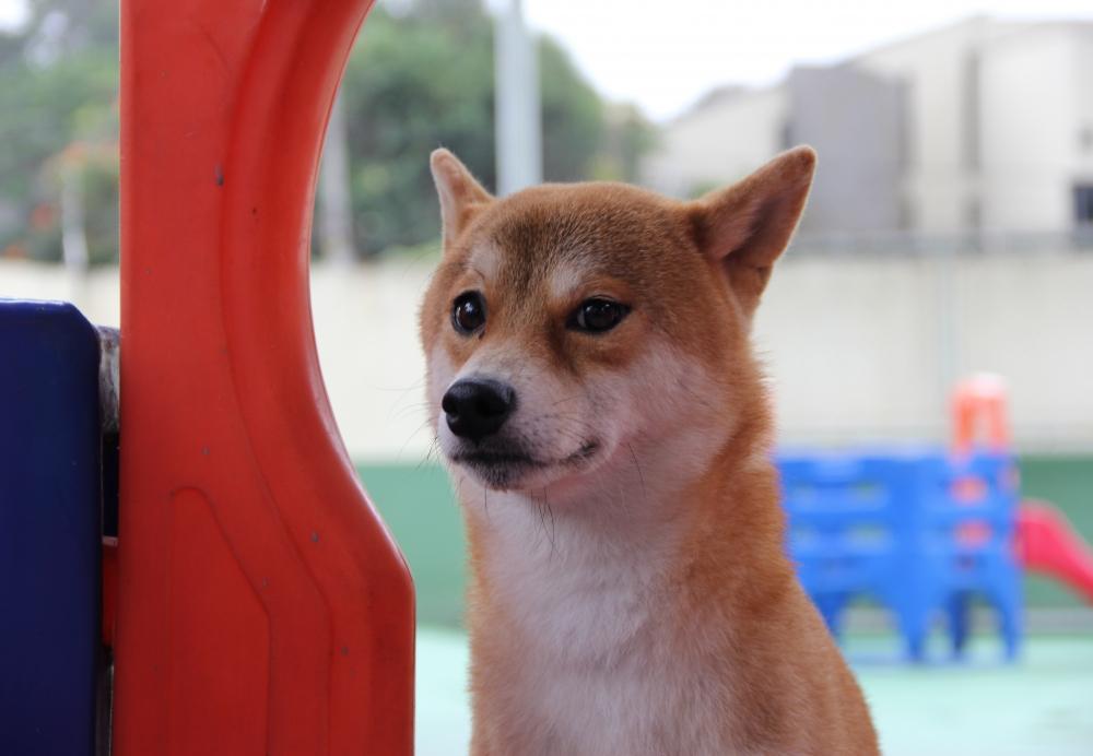 Creche para Cachorro Preço na Lauzane Paulista - Creche de Cachorro