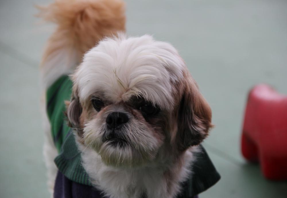 Creche para Cachorro em Aricanduva - Creche para Cães