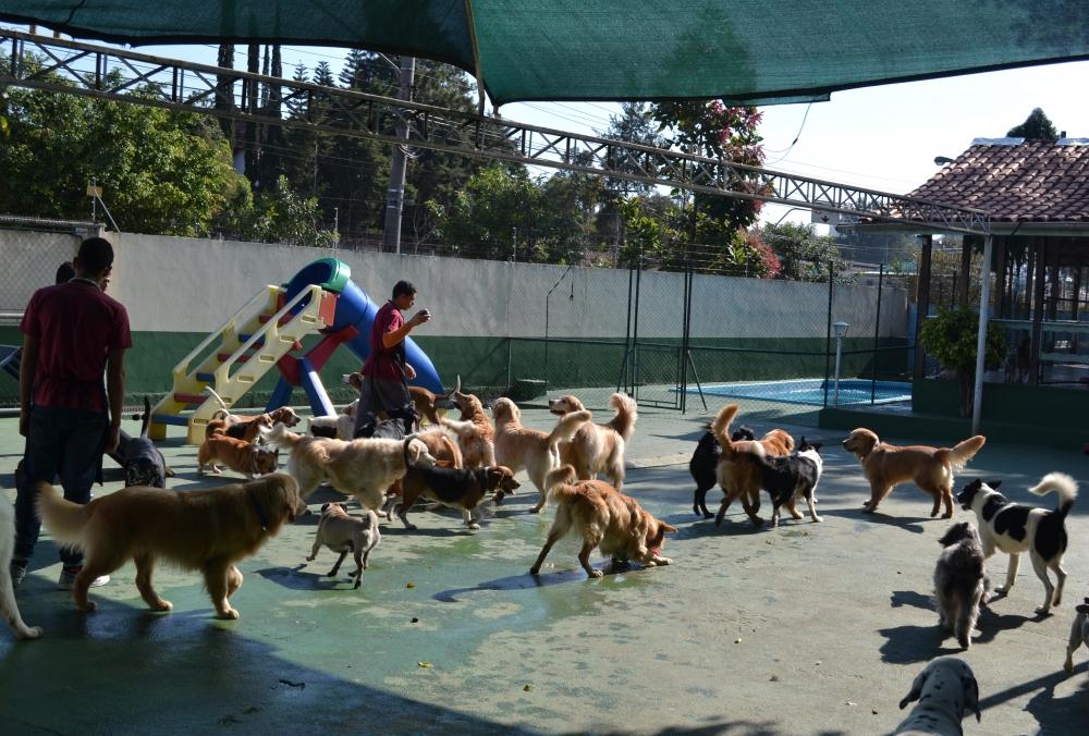 Creche para Cães Preço na Vila Buarque - Creche para Animais