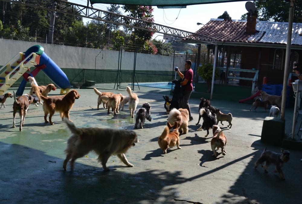 Creche para Cães em José Bonifácio - Creche para Animais
