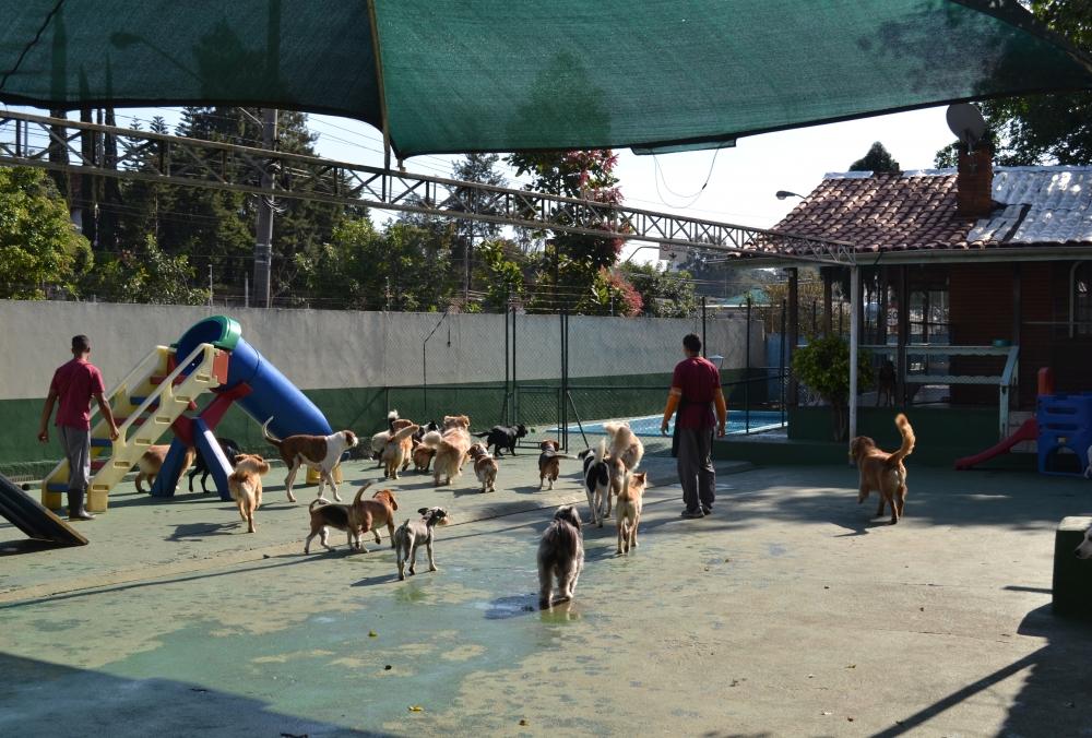Creche para Cão na Água Funda - Creche Canina