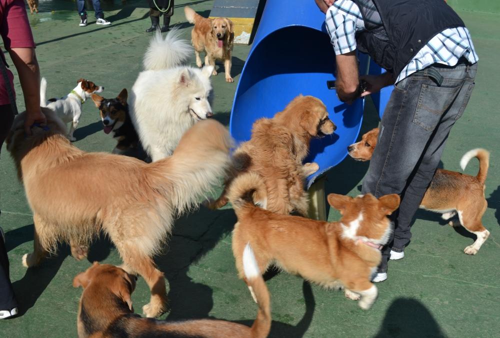 Creches Caninas na Barra Funda - Creche para Cães