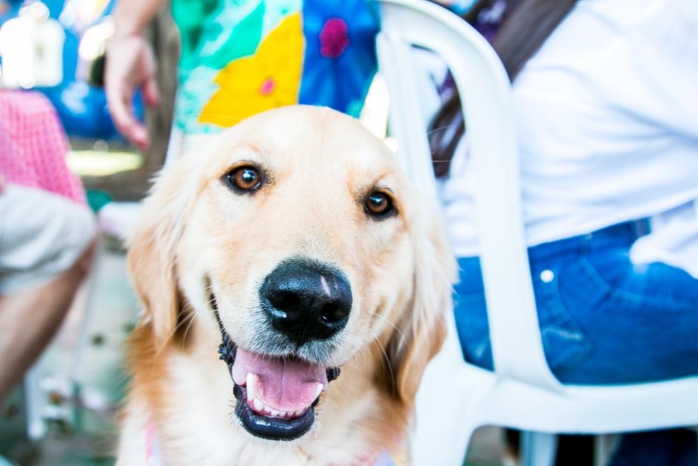 Creches Day Care Jardim Fortaleza - Day Care para Cachorro