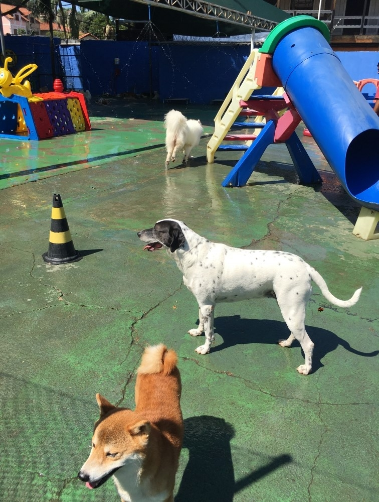 Creches para Cachorro em Sp na Bela Vista - Creche Canina