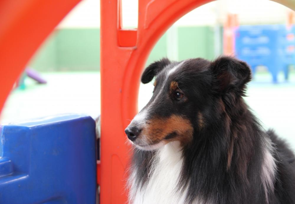 Creches para Cachorro no Jabaquara - Creche para Animais