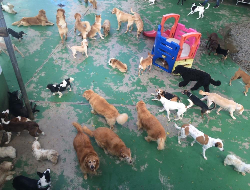 Day Care Canino Preço em Sapopemba - Day Care para Cachorro