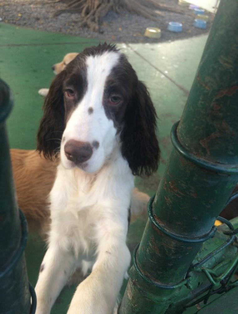 Day Care para Cachorro Preço em Cachoeirinha - Dog Resort