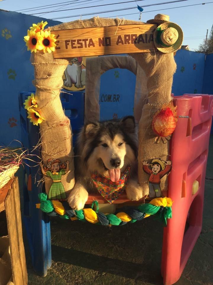 Day Care Pet Shops no Centro - Day Care para Cachorro