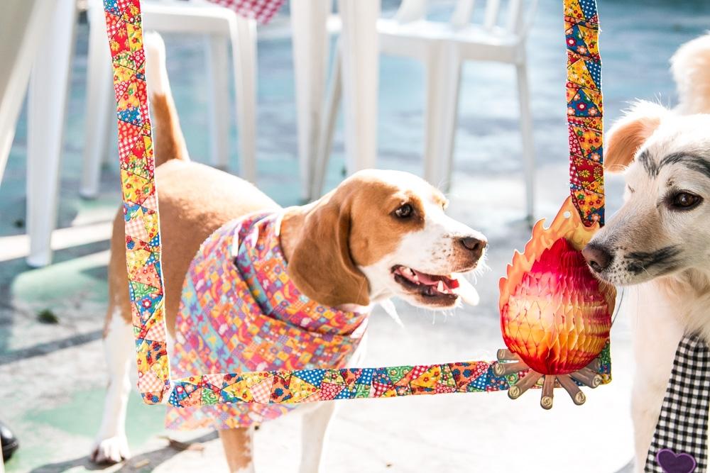Espaço Day Care em Santa Cecília - Dog Resort