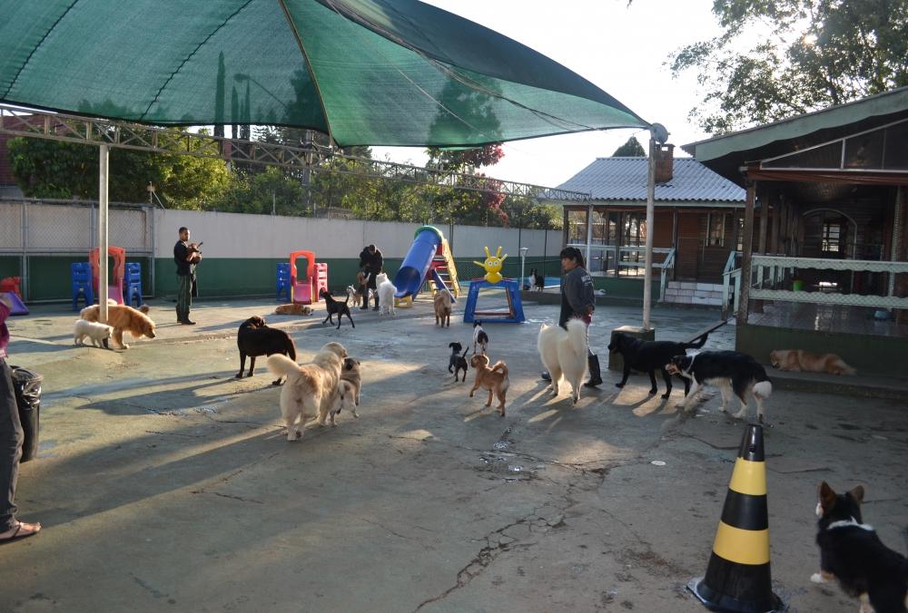 Hospedagem de Cachorro Preço em Moema - Hotel para Pet