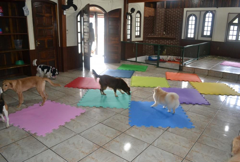 Hospedagem de Cachorro em Artur Alvim - Hotel para Cachorro