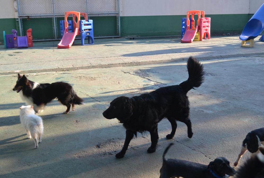 Hospedagem de Cachorros no Parque do Carmo - Serviços de Hotel para Cachorro