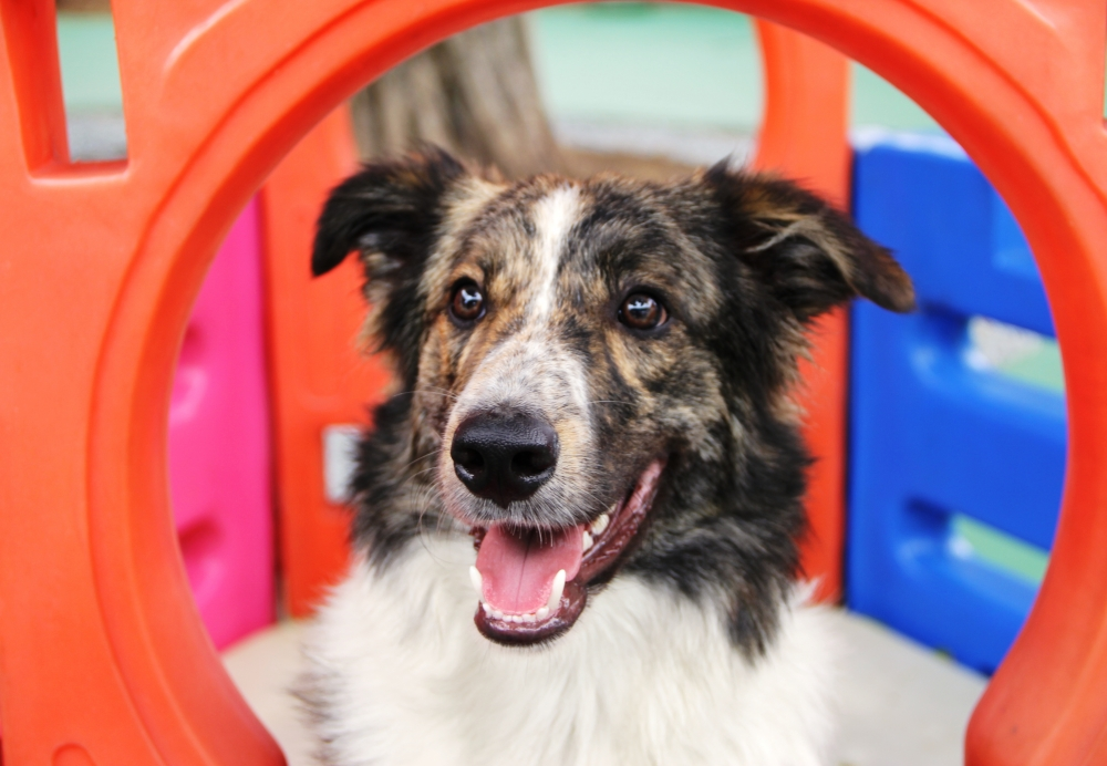 Hospedagem de Cão na Aclimação - Hotel de Cães