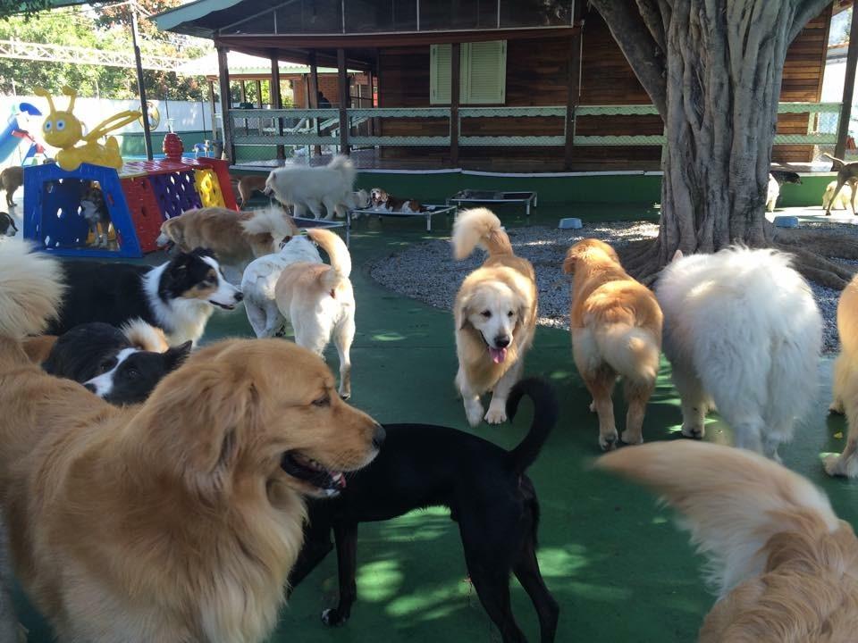 Hotéis de Cachorros na Vila Curuçá - Hotel para Cachorro em Sp
