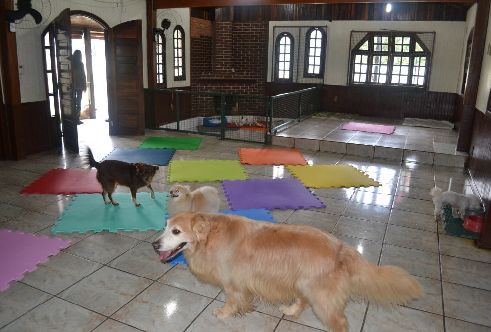 Hotéis Fazenda para Cachorros Bosque Maia - Hotel para Cachorro