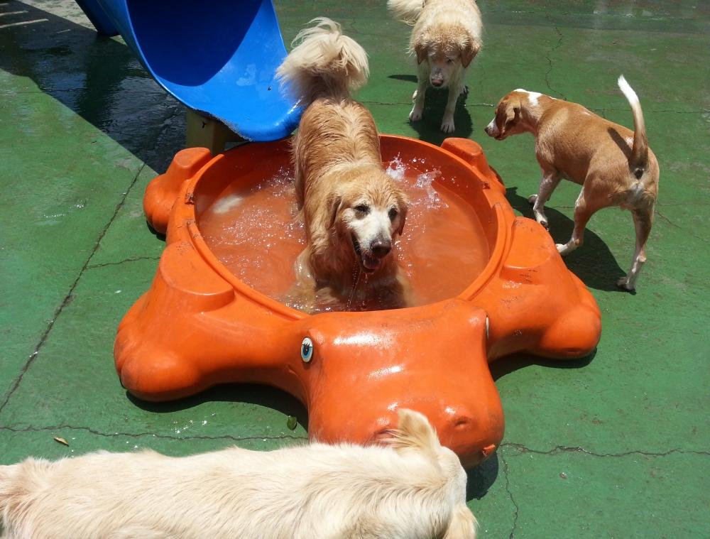 Hotéis para Cachorro Preço no Ipiranga - Hotel para Cachorro Diária