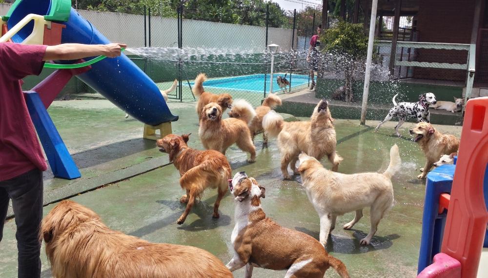 Hotéis para Cachorro no Jardim América - Hotel para Cachorro Diária