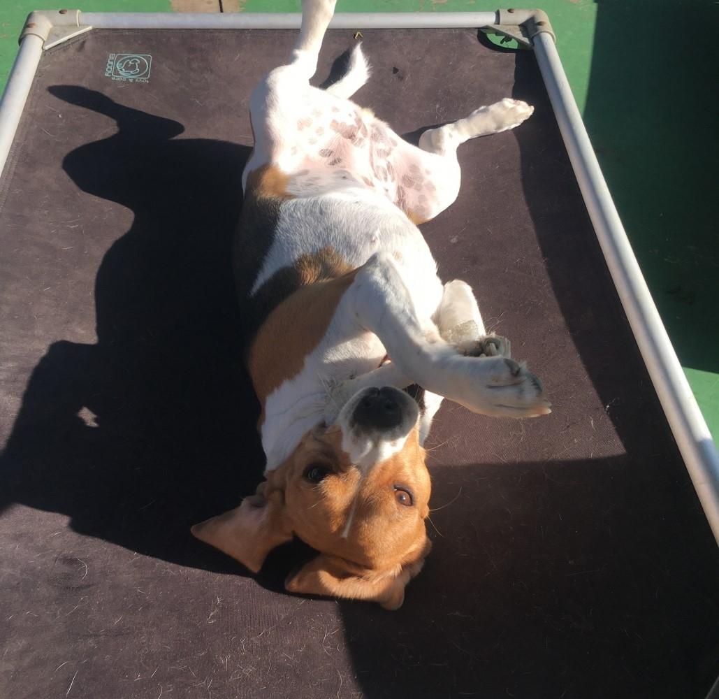 Hotéis para Cachorros Diária em Jaçanã - Hotéis para Cachorro