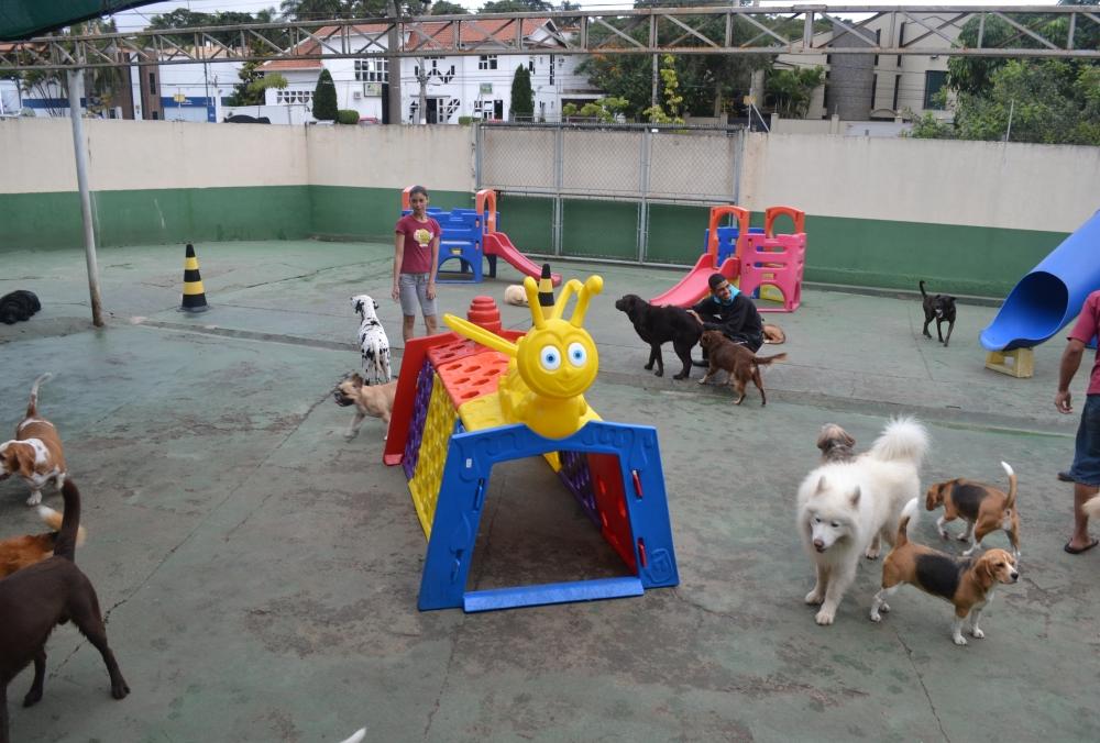 Hotéis para Cachorros em São Paulo na Água Funda - Hotel Pra Cachorro