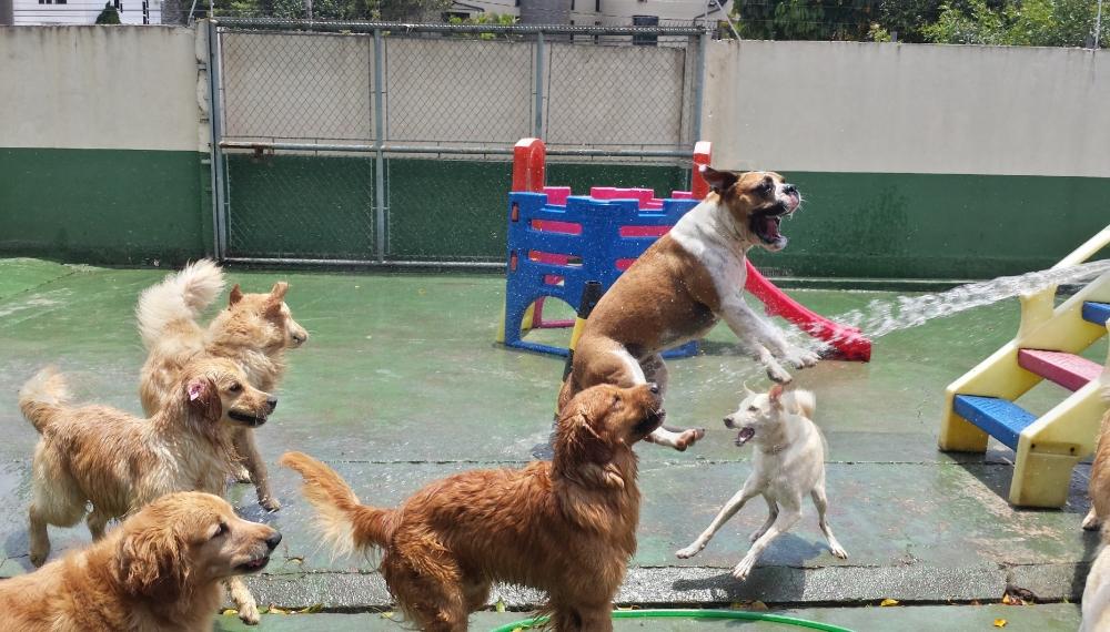Hotéis para Cachorros em Sp em Aricanduva - Hotel para Cachorro