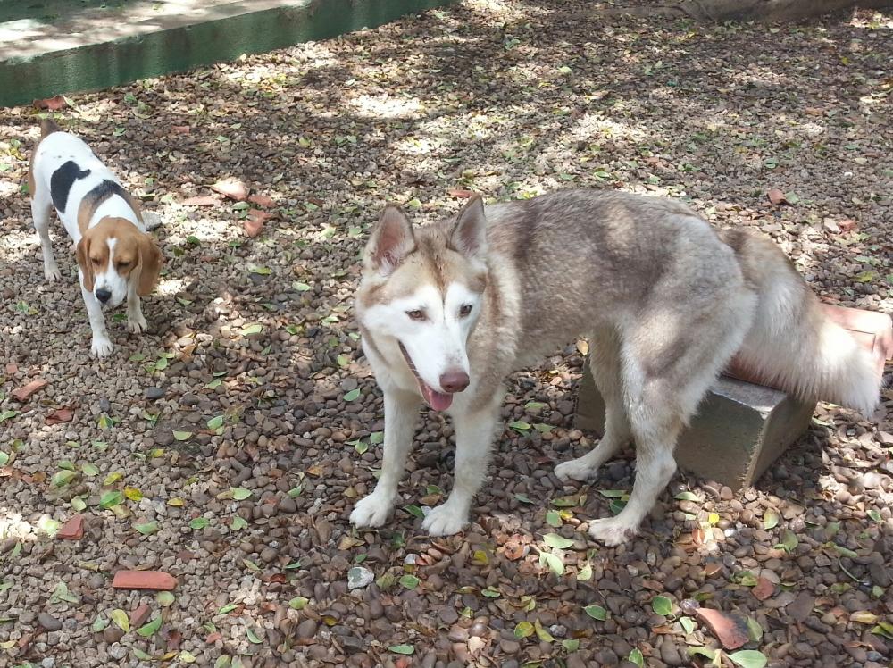 Hotéis para Cachorros no Brooklin Macedo - Hotéis para Cachorro