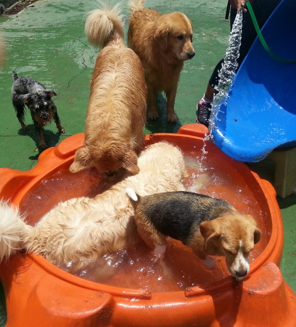 Hotéis para Cachorros Sp na Vila Esperança - Hotel para Cachorro em Sp