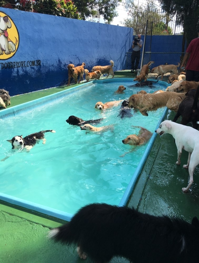 Hotéis para Cachorros na Vila Leopoldina - Hotel para Cachorro em Sp