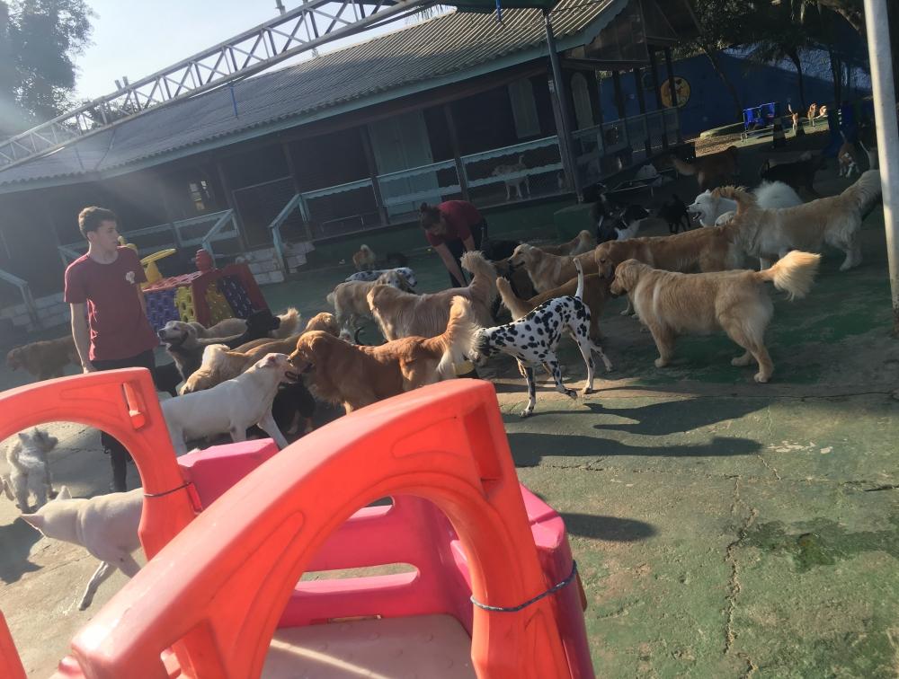 Hotéis para Pet na Saúde - Hotel Pra Cachorro