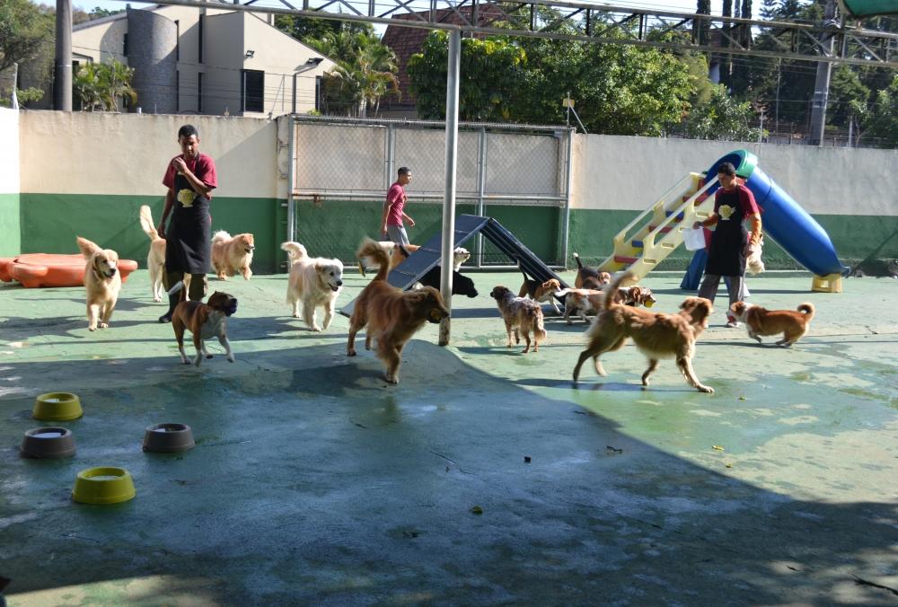 Hotéis Pra Cachorros Maia - Hotel para Pet