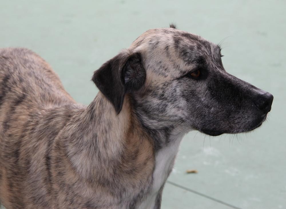 Hotel Creche para Cães Preço no Jardim Paulistano - Creche para Animais