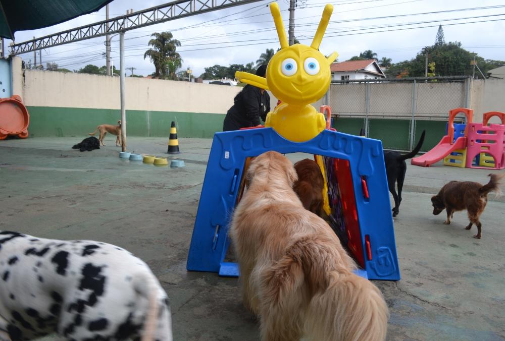 Hotel Fazenda para Cachorro Preço na Liberdade - Hotéis para Cachorro
