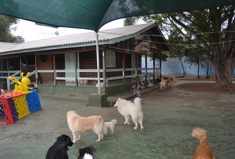 Hotel Fazenda para Cachorro na Vila Buarque - Hotel para Cachorro Diária