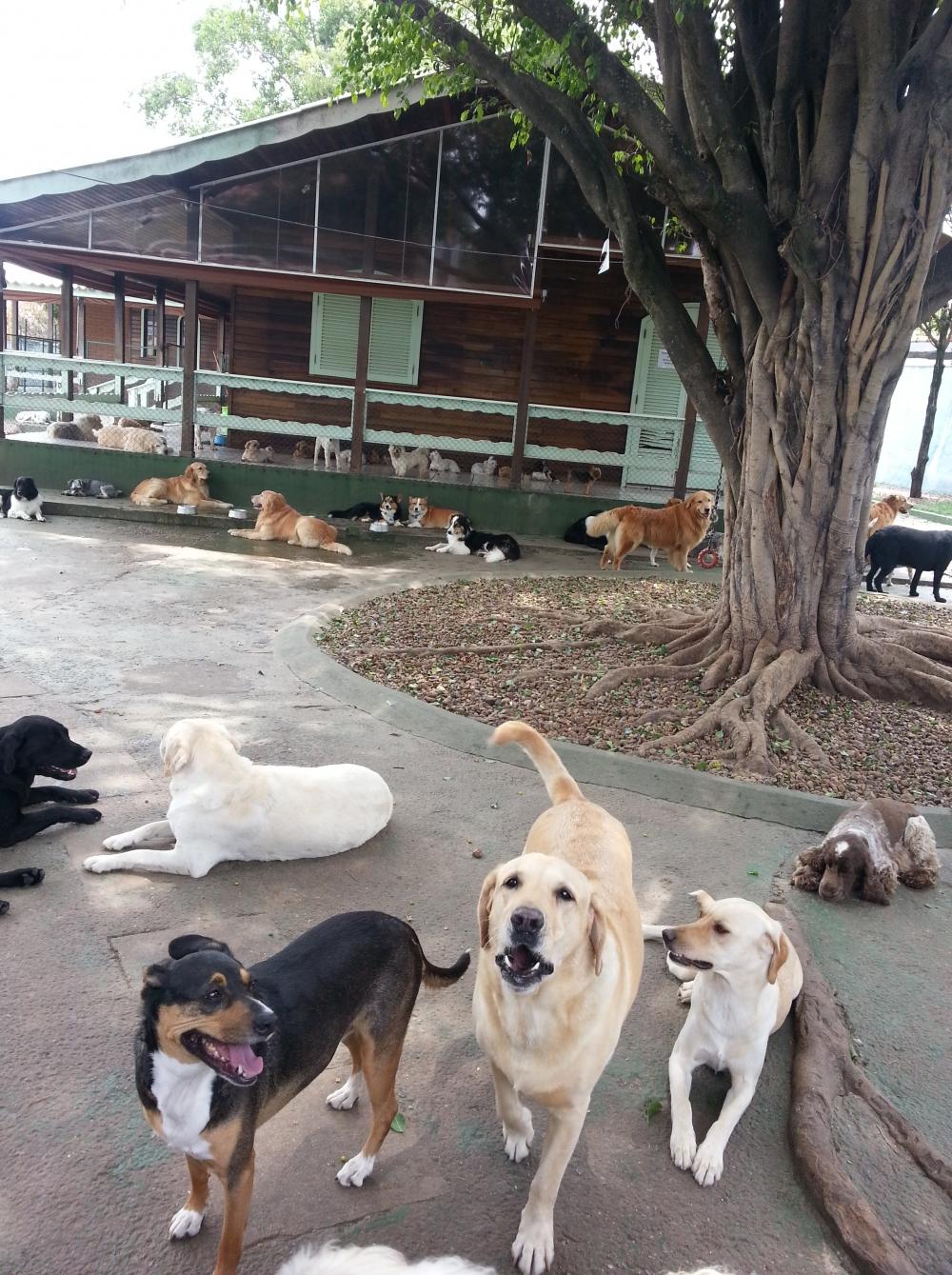 Hotel para Cachorro em Sp na Vila Carrão - Hotel para Cachorro Diária