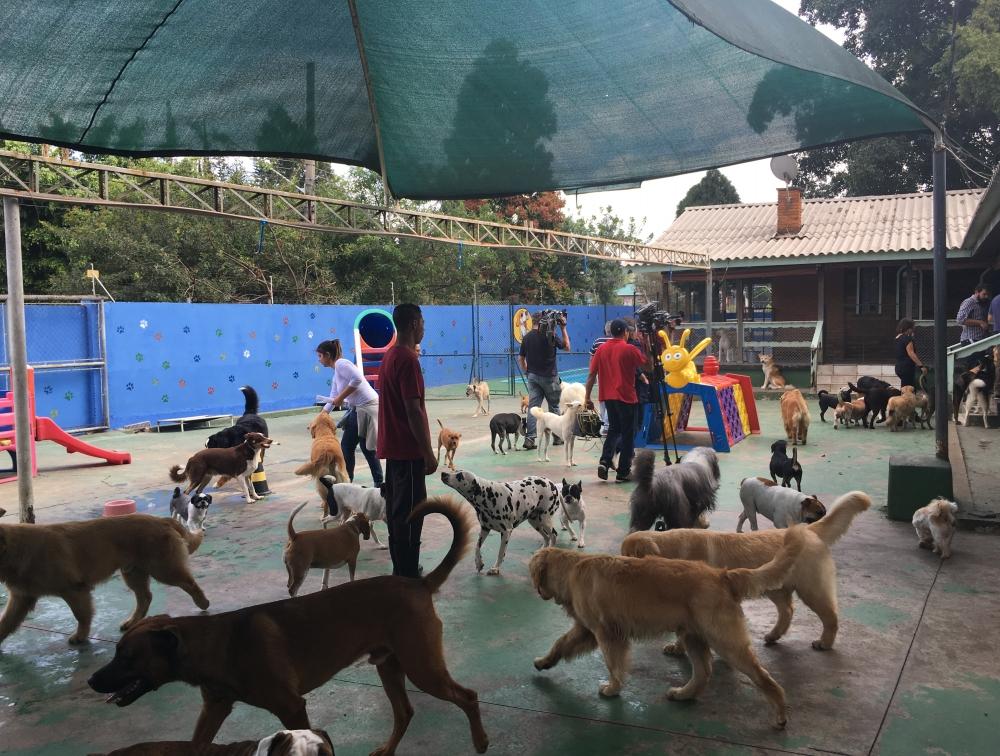 Hotel para Cachorro Preço em Aricanduva - Hotel para Cachorro em Sp