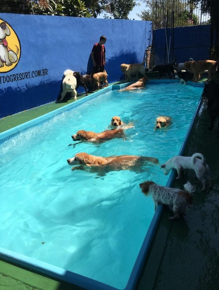 Hotel para Cachorro em Perdizes - Hotel para Cachorro Diária