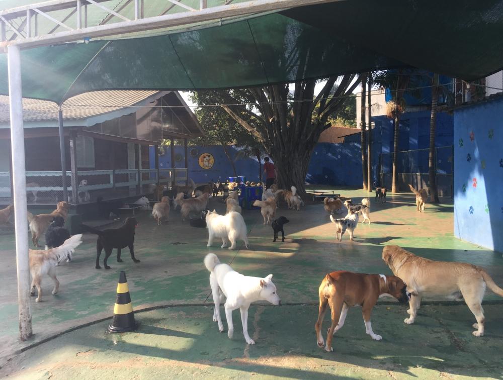Hotel para Pet Preço Água Chata - Hotel para Pet